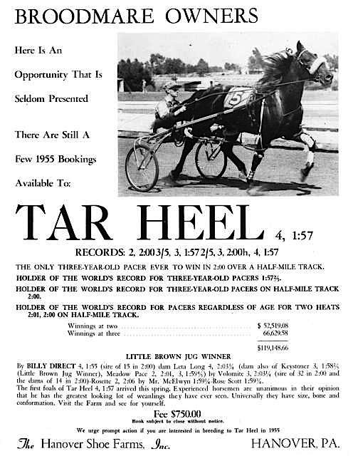 TarHeel006.jpg