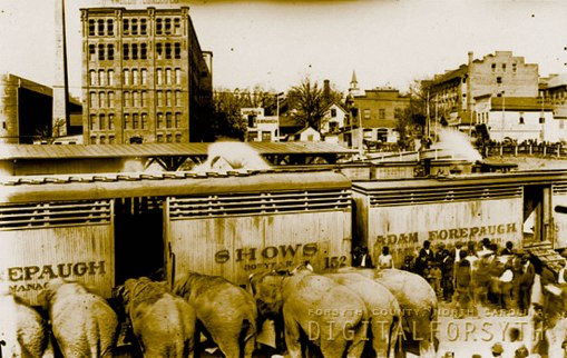 Seven of the eight performing elephants are seen at the railway depot in Winston. The Forepaugh show required two trains, both of which can be seen here. Just beyond them are, left to right, the R.J. Reynolds plant #256, the Life Insurance Company of Virginia offices, S.T. Mathis, wines & liquors, and Coleman Brothers, leaf tobacco dealers. Above Coleman Bros is a Reynolds leaf storage house and to its right, the tobacco factory of Benjamin Franklin Hanes, brother of P.H. Hanes. In the distance, is the steeple of the First Baptist Church of Winston, on Second Street between Church and Main. The 35' smokestack next to it marks the site of the Winston Electric Light and Car Plant, where the power to run the streetcar system was generated and cars were stored when not in service.